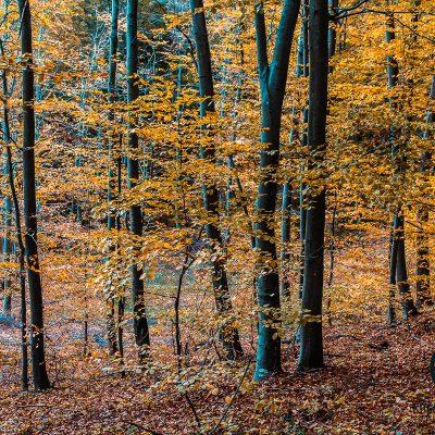 Grebengrad u jesen