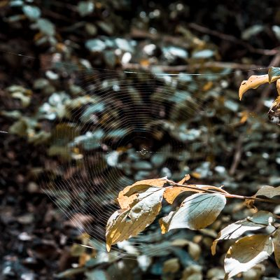 Čevo - Jesen na Čevu