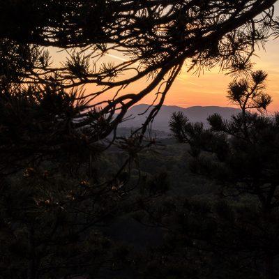 Ravna Gora kroz borovinu