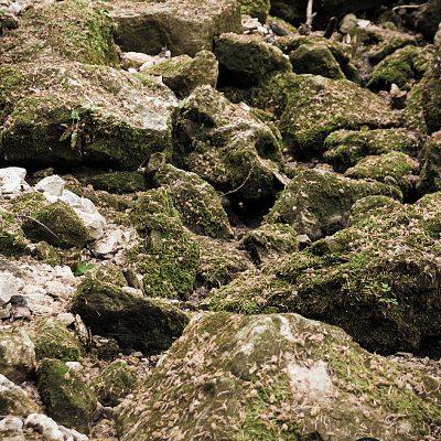 Kamen u mahovini - izbliza