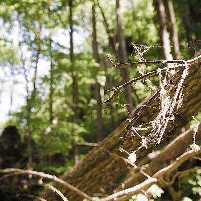Skulpture prirode - II. dio