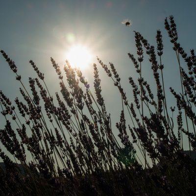 Pod lipanjskim suncem